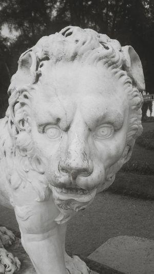 Драматичный лев. арт  животные Art Animals Statue Sculpture скульптура