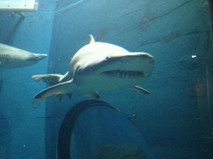 Shark in water Animal Aquarium Blue Close-up Day Fish Nature No People Ocean Sea Shark