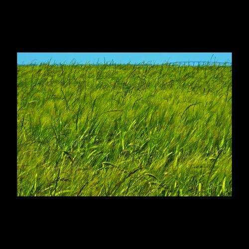 À Oléron - France - Ile D'Oleron EyeEm Best Shots Beautiful Nature Landscape Photography Green Landscapes EyeEm Nature Lover EyeEm Masterclass EyeEm Best Shots - Nature Landscape_photography