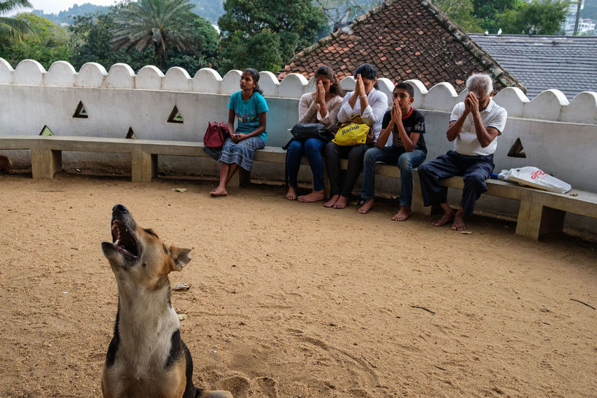 Prayer at the holy tree temple in Kandy, Sri Lanka. Dec 2017. Kandy Sri Lanka Prayer Religion Buddhism Streetphotography People Dog
