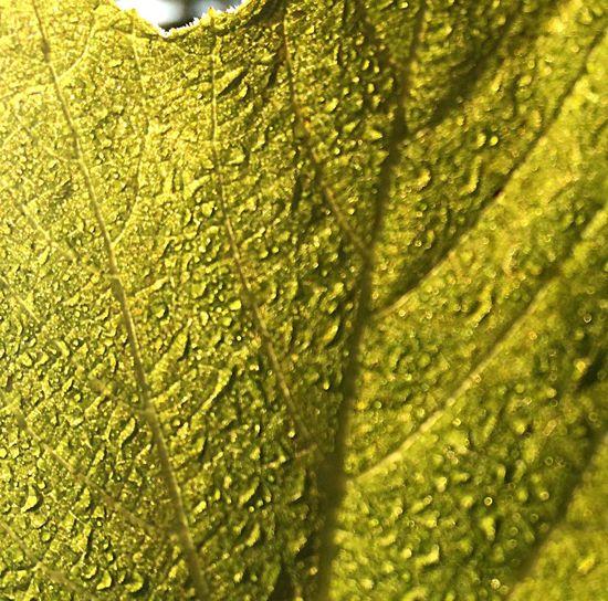 Nature Dew