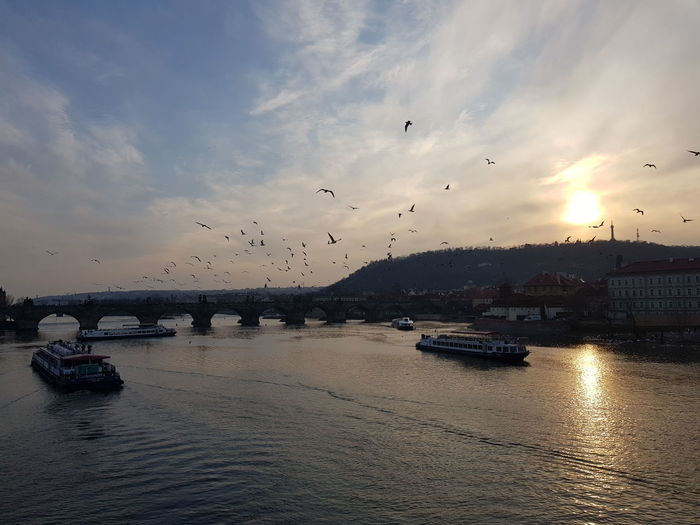 Prague Czech Republic Prague Bridge Bird Flying Sea Sunset Spread Wings Water Flock Of Birds Mid-air Shore Dramatic Sky Atmospheric Mood Moody Sky Romantic Sky First Eyeem Photo