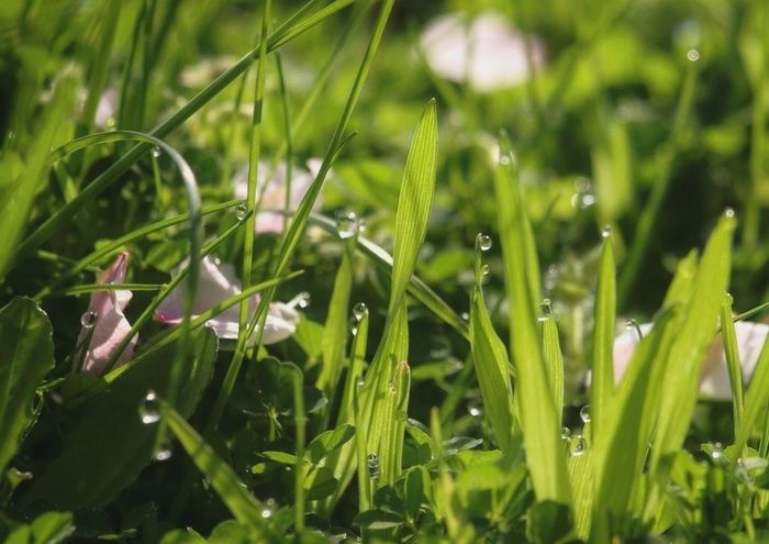 Morning Dew EyeEm Nature Lover Petals Minimum Life ♪