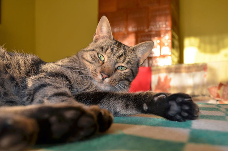 Cat The Purist (no Edit, No Filter)