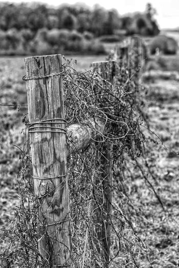Fence Posts Fencepost Posts Fence Farm Pasture Close-up Agricultural Field Crop  Farmland