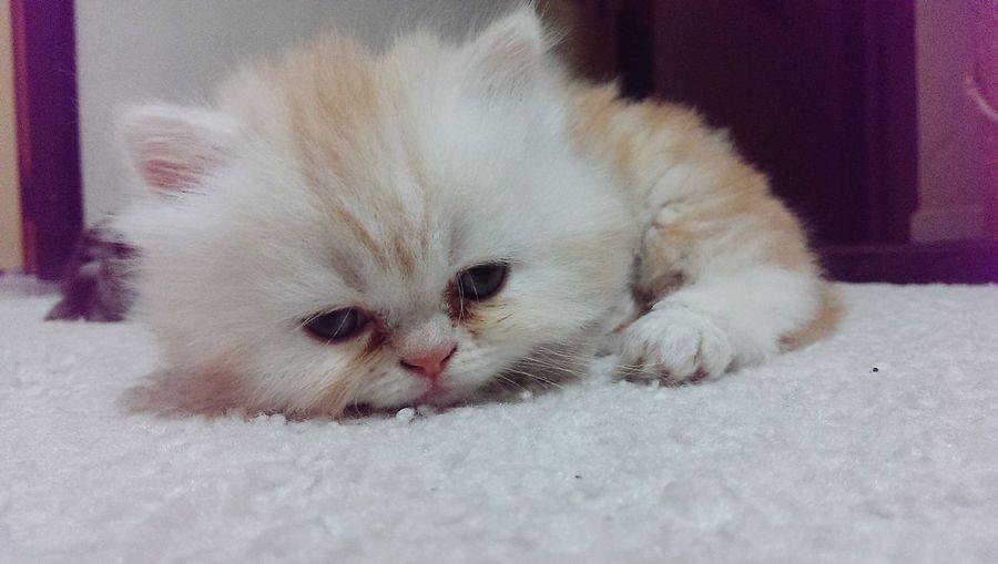 Kitty!  Puppy Sleepy Cat Love❤ Enjoying Life Relaxing First Eyeem Photo