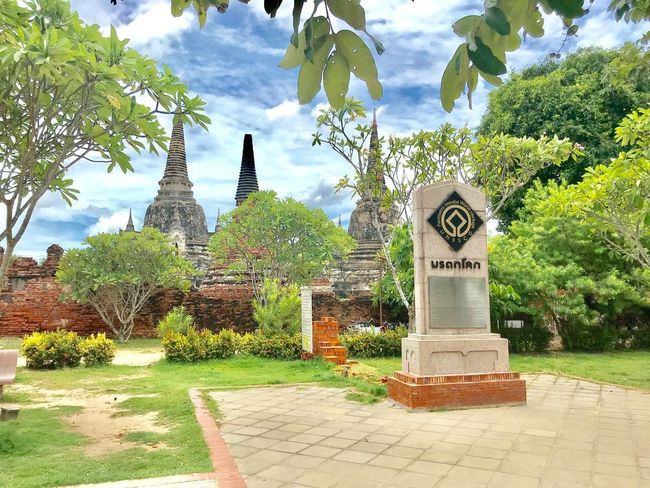 Ayutthaya Thailand Plant Art And Craft Tree Architecture Built Structure Sculpture Growth Religion Day Nature No People Belief Cloud - Sky Creativity