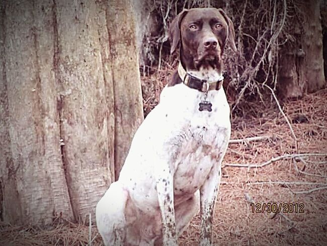 First Eyeem Photo Simplistic Beauty Florida Life Gsp Duck Pond Shotgun Dog Pointer Hunting Dog German Shorthaired Pointer Nature Photography Cypress Trees  Bestfriend Bff❤ Pookie