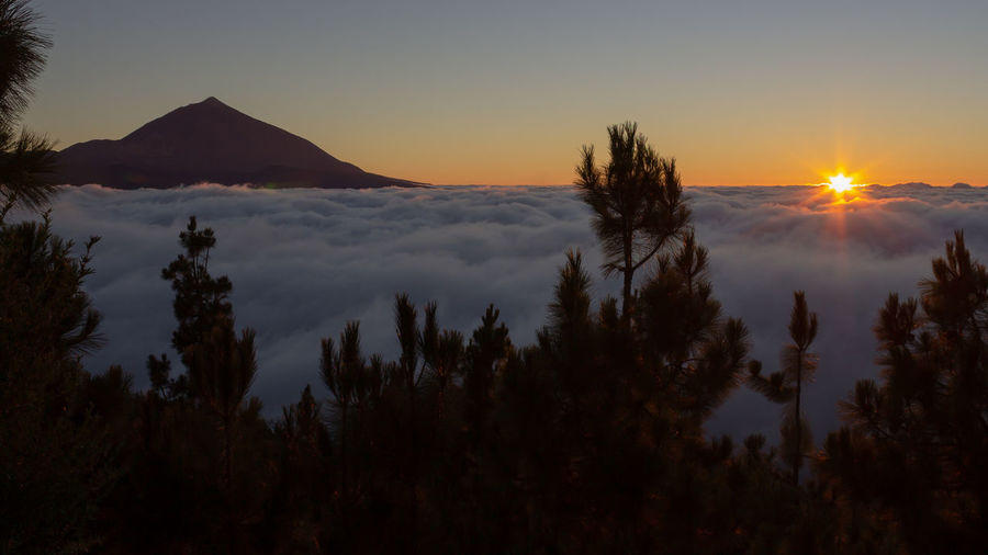 sunset above the clouds Clouds Clouds And Sky Volcano Sun Sunset Sunset_collection Nature Photography Nature_collection EyeEm Nature Lover Eye4photography  EyeEm Selects EyeEm Best Shots EyeEm Gallery Eye4photography  EyeEm EyeEmBestPics Teide Tenerife Canary Islands Tree Mountain Sunset Fog Pine Tree Pinaceae Sunlight Sun Silhouette