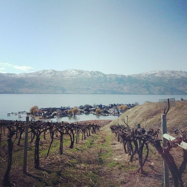 I'll come back in summer just to pick something. Kelowna Winery