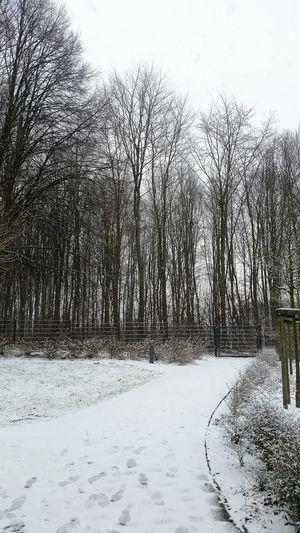 Schnee - ohne