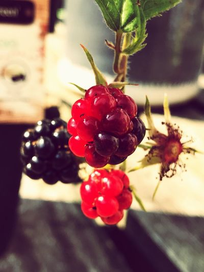 Fruit Red Food And Drink Close-up Growth Focus On Foreground Freshness Healthy Eating No People Food Nature Outdoors Nature Backyard Garden Berries Berry Fruit Day Beauty In Nature