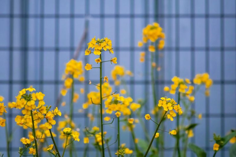 Yellow Flower Flowers Flower Collection Flowerporn Nature EyeEm Nature Lover Nature_collection Nature Photography Taking Photos EyeEm Best Shots EyeEm Gallery From My Point Of View The Week on EyeEm Flower Flowering Plant Yellow Plant Beauty In Nature Vulnerability  Growth Freshness Fragility Nature Selective Focus Plant Stem Petal