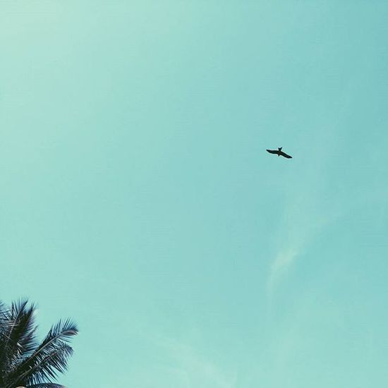 Predator. Vscocam VSCO Sky Minimal Minimalism Candyminimal Blue Minimalist Sky Kite Bird Tree Minimalmood