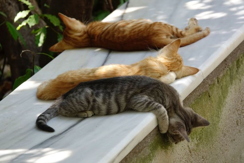... chill out Domestic Cat Feline Cat Domestic Animals Animal Themes Pets Mammal Relaxation Sleeping No People Day Lying Down Outdoors Nature Close-up Catslife Animal Wildlife AMP PICTURES