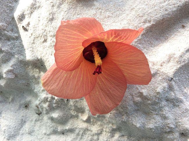 Sae Flower Beach Outdoors Flower Orange Beauty In Nature Nature