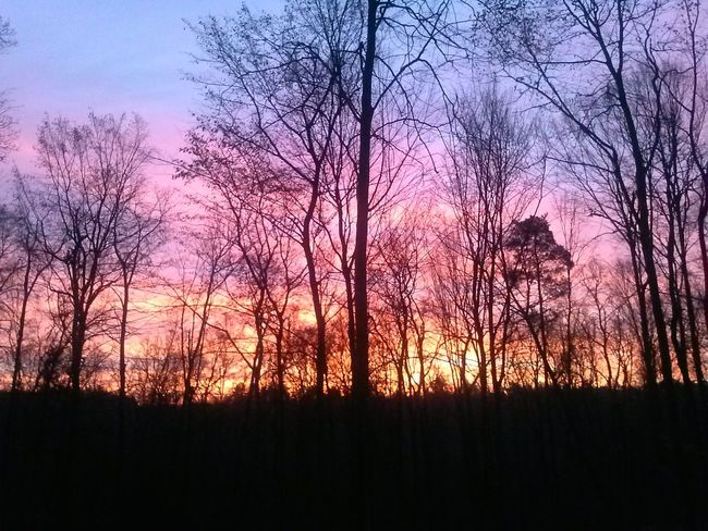 Słońce wschodzi zimową porą na różowo