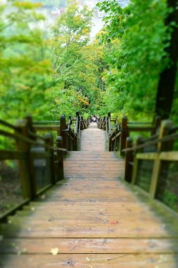 Stairstotop Stairs Direction The Way Forward Plant Tree Footpath Day Green Color