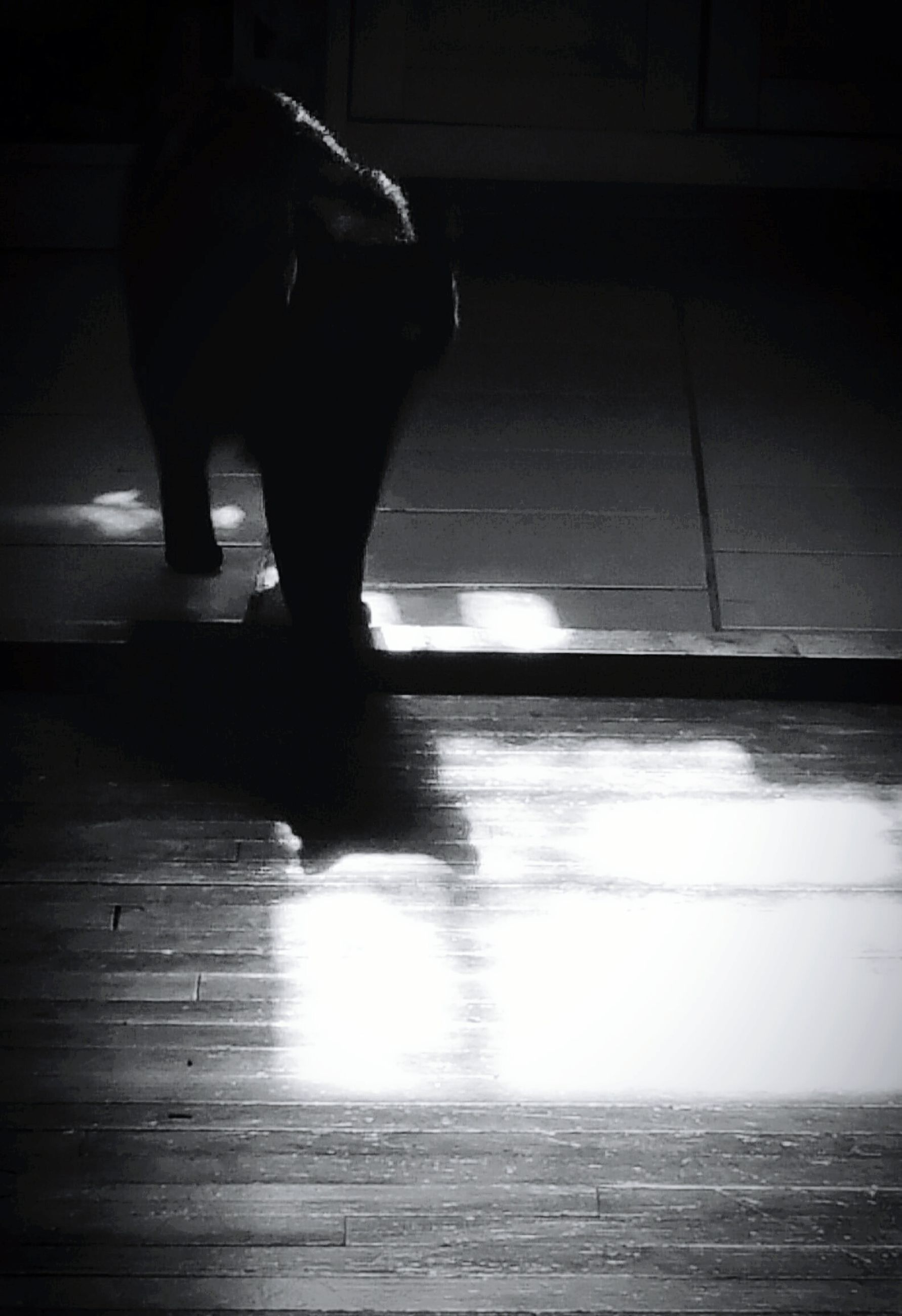 indoors, shadow, walking, silhouette, full length, low section, men, lifestyles, sunlight, flooring, standing, rear view, side view, person, street, dog, unrecognizable person, leisure activity
