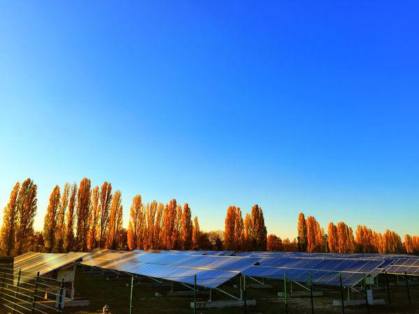 solar energy plant at sunshine Blue Sky Clear Sky Fence Panels Sky Solar Solar Collector Solar Energy Solar Energy Plant Solar Panel Solar Panels Solar Plant Sun Sun Energy Trees