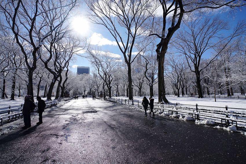 Winter Wonderland Winter Central Park NYC Photography NYC Manhattan Eyemphotography
