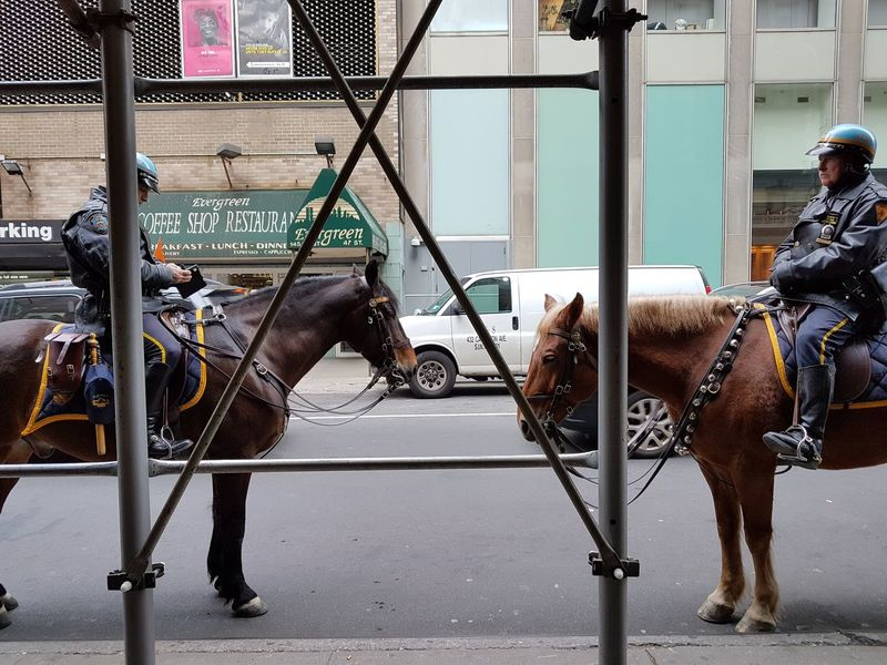 #horse #manhattan #nyc #ny #newyork #newyorkcity #usa #unitedstates #america #summer #NewYork  #newyorkcity #nypd #Police Animal Themes Domestic Animals