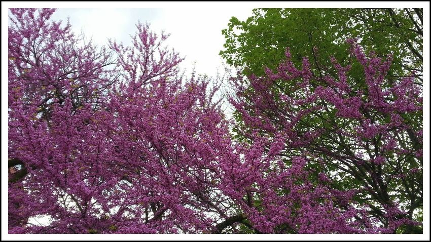 Spring Has Arrived Spring Colors Spring Has Sprung Whispers Of Spring