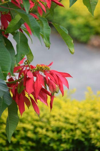 Leaf Nature Red