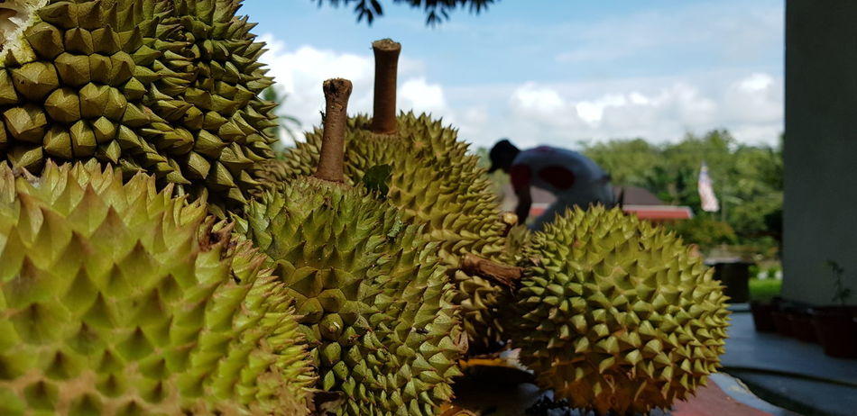 Durians Growth Fruit Nature Food Outdoors People Only Men