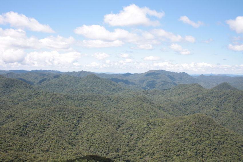 Rainforest in southern Brazil Blumenau Blumenau, SC, Brazil Brazil Nature Rainforest Santa Catarina Santa Catarina Brazil Santa Catarina, Brazil Tropical Tropical Climate Tropical Paradise Tropical Plants
