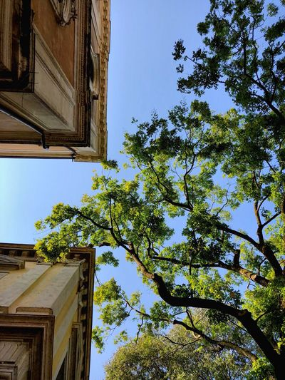 Albetis Architecture Low Angle View Built Structure Plant Sky Building Exterior Building Tree Clear Sky Nature Growth Day No People Branch Green Color Outdoors Sunlight House Window Residential District