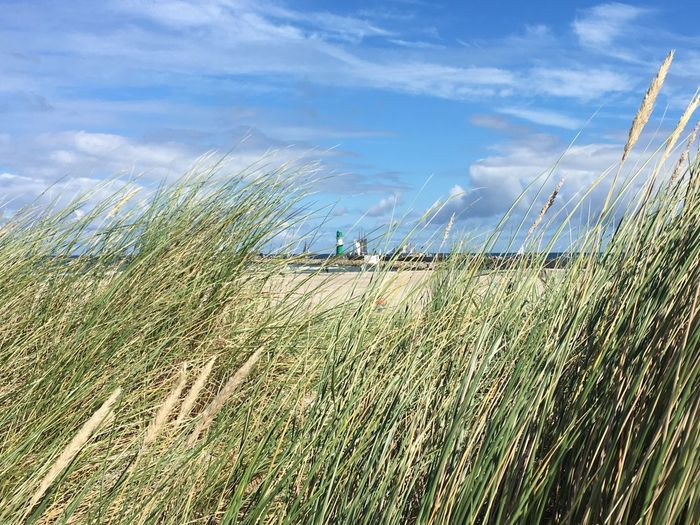 Grass Growing At Beach Against Blue Sky