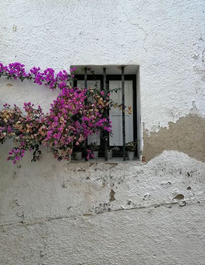 Flower pots on wall of building
