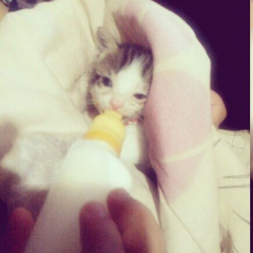 ÉMtaFofura Apaixonada Catbaby Love Socute