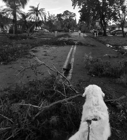 the clean up begins ......... Check This Out Black And White My Buddy Nature Observing Walking And Seeing What Nature Gives Us Fallen Branches Natures Destruction