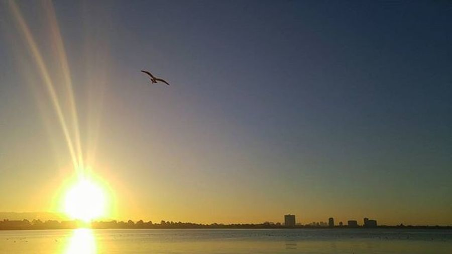 Always nice to watch the sunrise. Chilly this morning. Berkeleymarina Sunrise Sunrise_sunsets_aroundworld Seagull Landscape Oceanscape Ocean Bayarea Sanfrancisco Marina