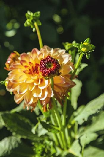 Flower Flowering Plant Fragility Plant Vulnerability  Beauty In Nature Freshness Growth Petal Flower Head Inflorescence Close-up Nature Focus On Foreground No People Day Green Color Yellow Plant Part Selective Focus Outdoors Pollen