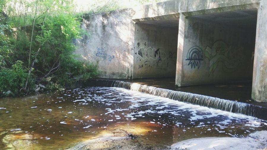 Nature Graffiti Hogtown Creek, Gainesville, Florida