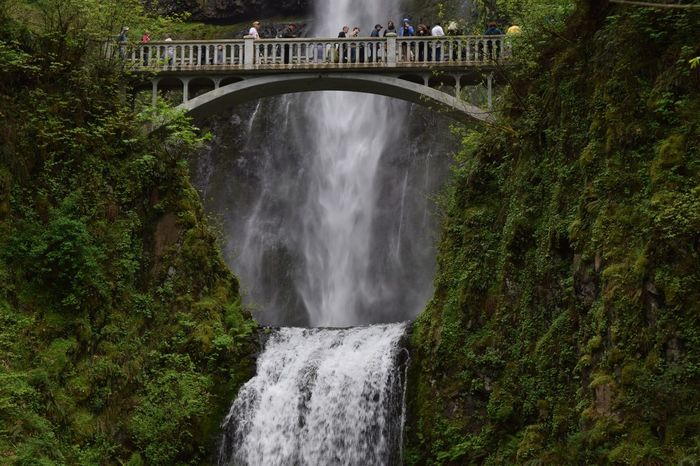 Waterfall Multnomah Falls  Water Nature Tree Built Structure Outdoors Beauty In Nature Scenics Bridge - Man Made Structure Architecture Motion Day No People EyeEm Best Shots EyeEm Nature Lover Streamzoofamily No Edit/no Filter Nature Bridge Natural Beauty Water_collection Travel Photography Waterfall_collection The Great Outdoors - 2017 EyeEm Awards EyeEm Selects