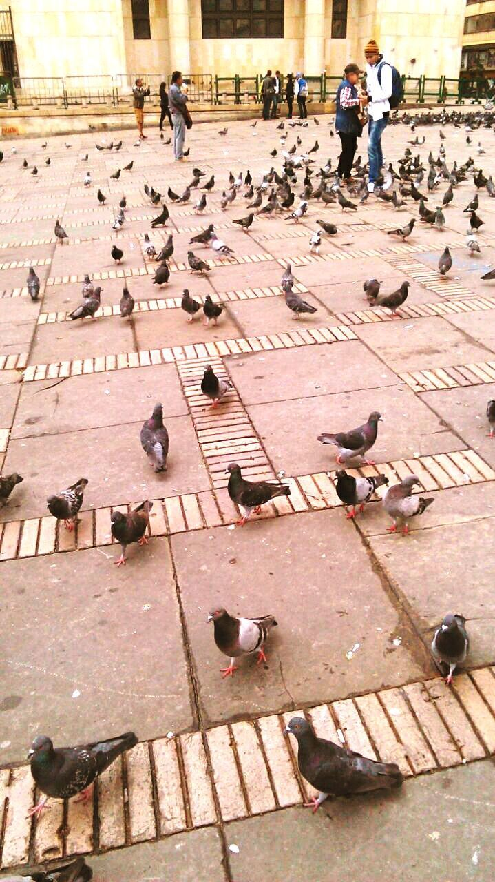bird, large group of people, real people, day, animal themes, outdoors, large group of animals, animals in the wild, people
