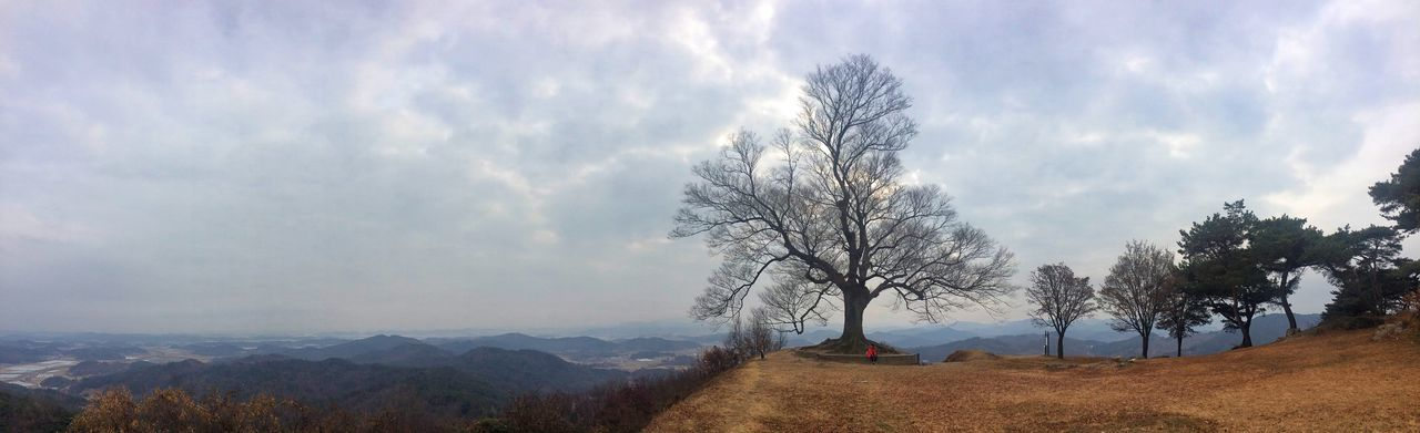 Tree Sky Tranquility Landscape Nature Beauty In Nature Tranquil Scene