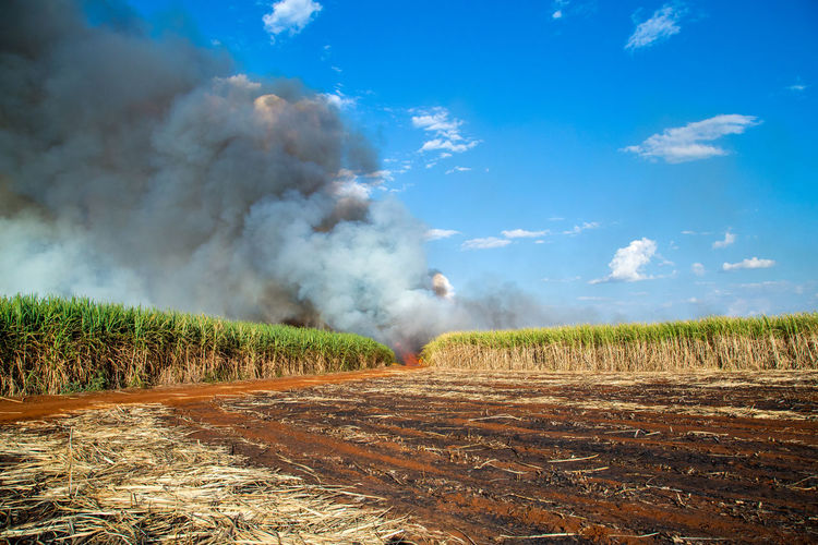 Fired Sugar Cane Field