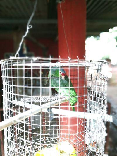 Un ave una jaula cárcel anhelo de libertad first eyeem photo