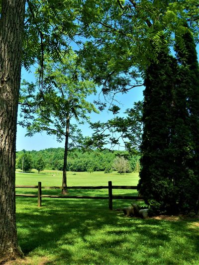 Split Rail Fence Creek Creekside Fences & Beyond Indiana USA Wood Beauty In Nature Country Life Countrylife Countryside Day Fence Fencepost Fences Fencing Green Color Growth Land Landscape Nature Outdoors Plant Tranquility Tree Wood - Material