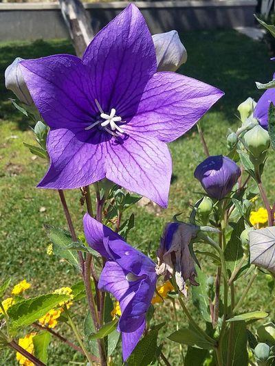 Flower Nature Purple Beauty In Nature Particolari EyeEm Nature Lover Colorcolorcolor Primavereggiando Primavera2017