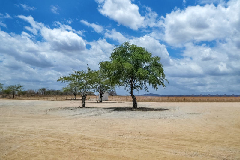 Cloud - Sky Tree Sky Landscape Plant Land Environment Scenics - Nature Tranquil Scene Beauty In Nature Tranquility Nature Day No People Field Growth Non-urban Scene Outdoors Sand Desert Arid Climate Climate Isolated Semi-arid
