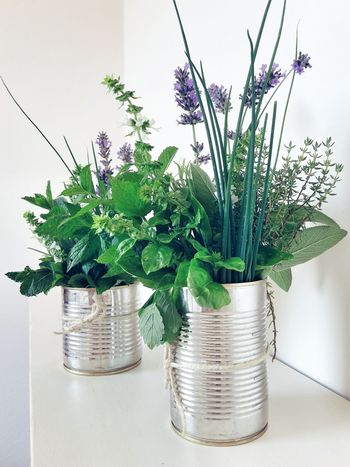 Can you smell the summer? The Still Life Photographer - 2018 EyeEm Awards Picked From The Garden Country Life Mint Sage Freshness White Background Green Color Tin Cans Rosemary Thyme Basil Aromatic Herbs Aromatics The Art Of Recycling Lavender