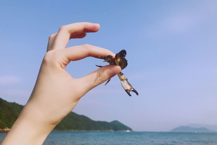 Close-up of hand holding crab against clear sky