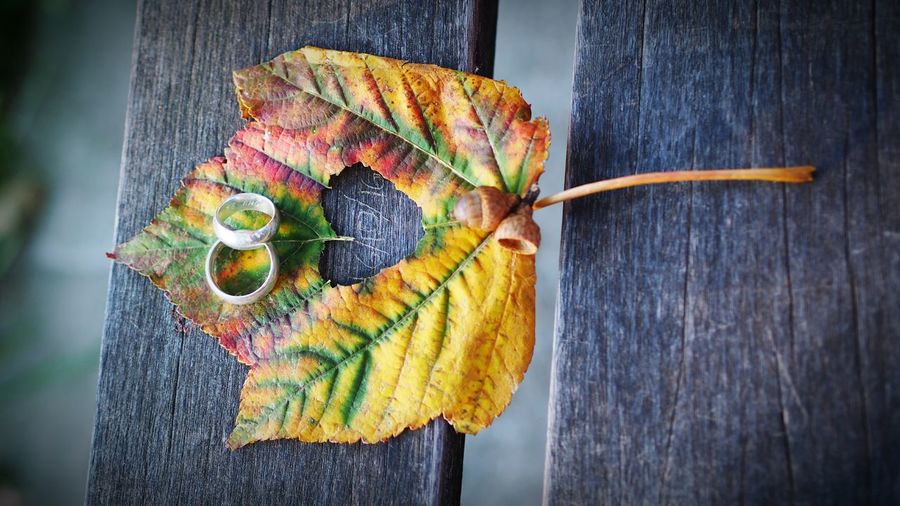 Wood - Material Outdoors Close-up Love Rings Heartbeat Moments Hojas De Otoño Otoño 🍁 Fall Beauty Beatiful Moments