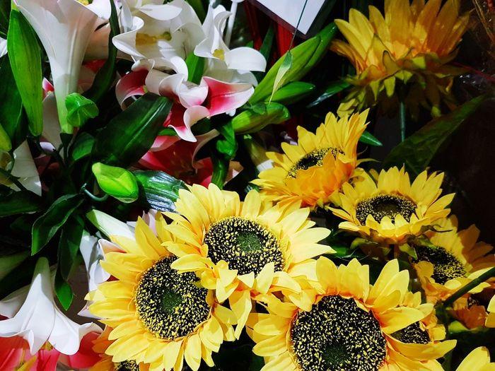 Flowers Beautifull Close-up Singapore New Outdoors❤